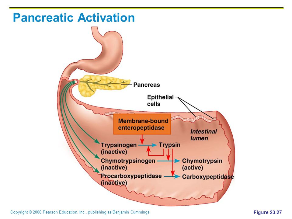 Pancreatic Activation