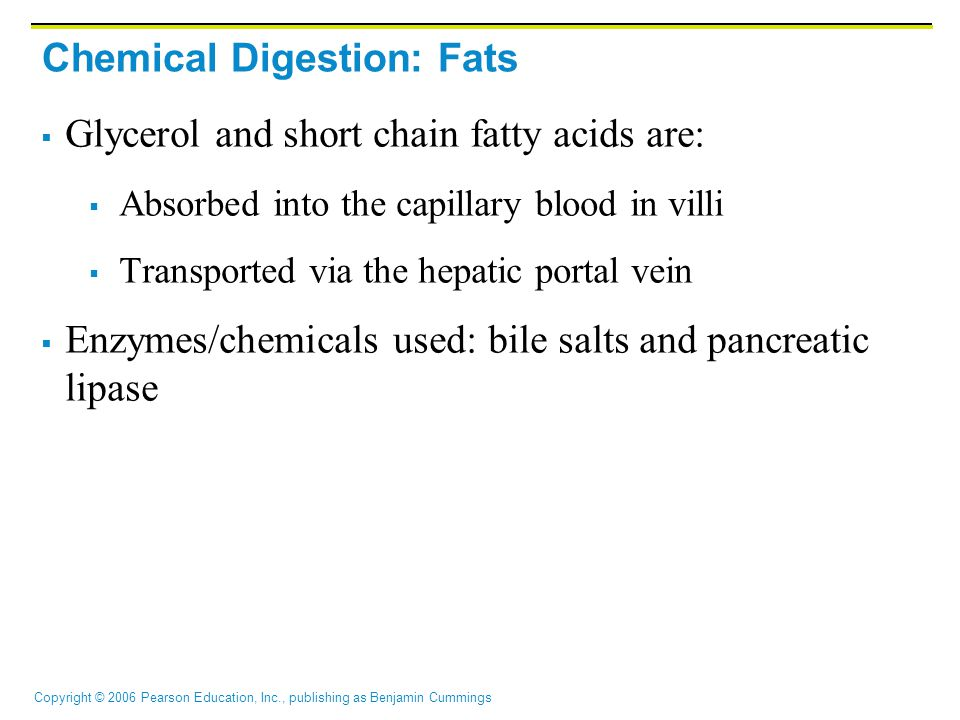 Chemical Digestion: Fats