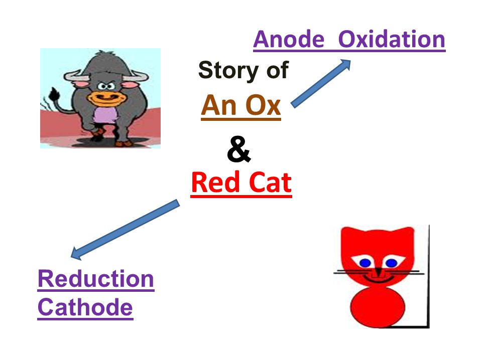 Anode Oxidation Story of An Ox Red Cat & Reduction Cathode