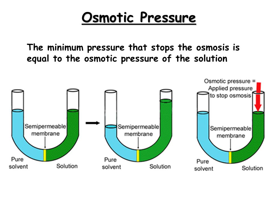 Osmotic Pressure The minimum pressure that stops the osmosis is equal to the osmotic pressure of the solution.