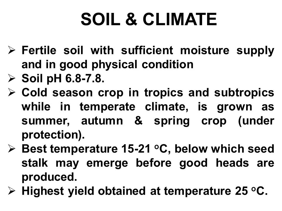 SOIL & CLIMATE Fertile soil with sufficient moisture supply and in good physical condition. Soil pH 6.8-7.8.