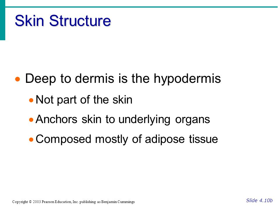 Skin Structure Deep to dermis is the hypodermis Not part of the skin