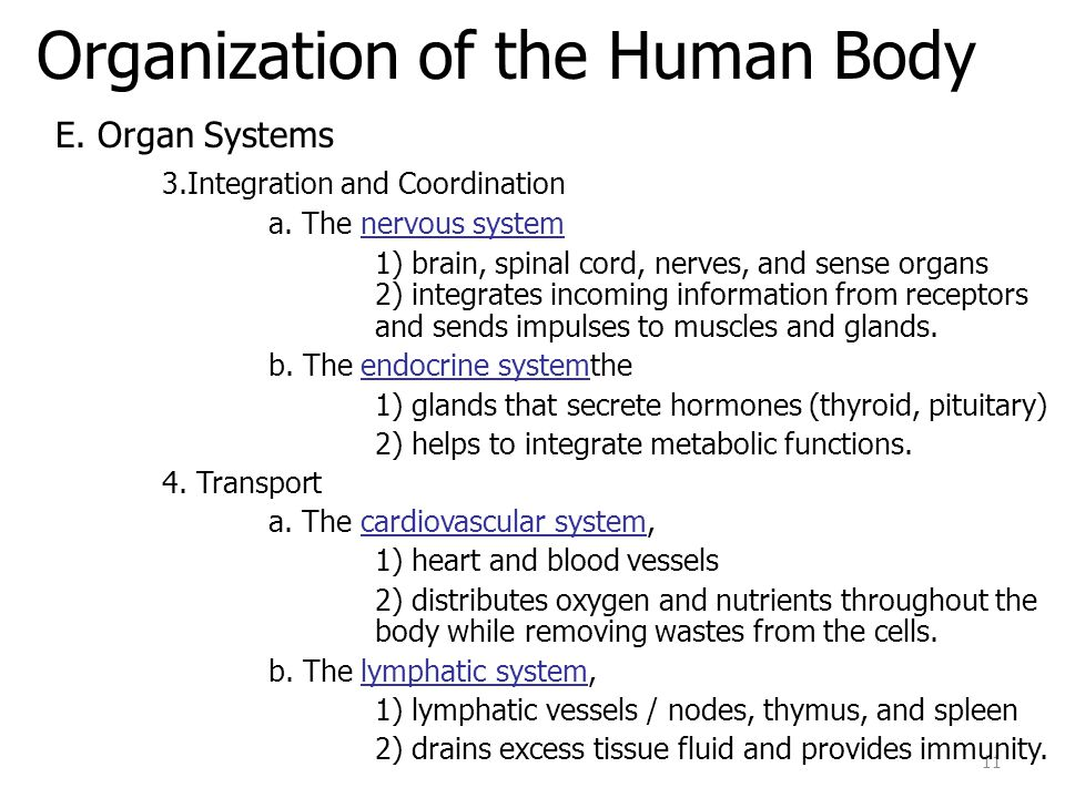 Organization of the Human Body