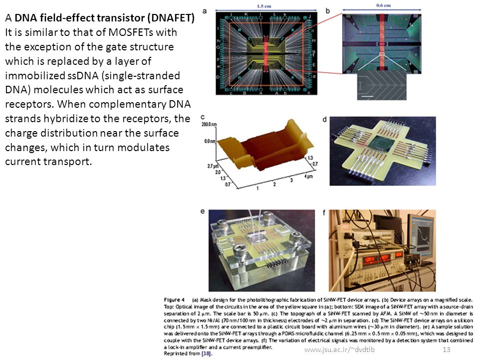 A DNA field-effect transistor (DNAFET)