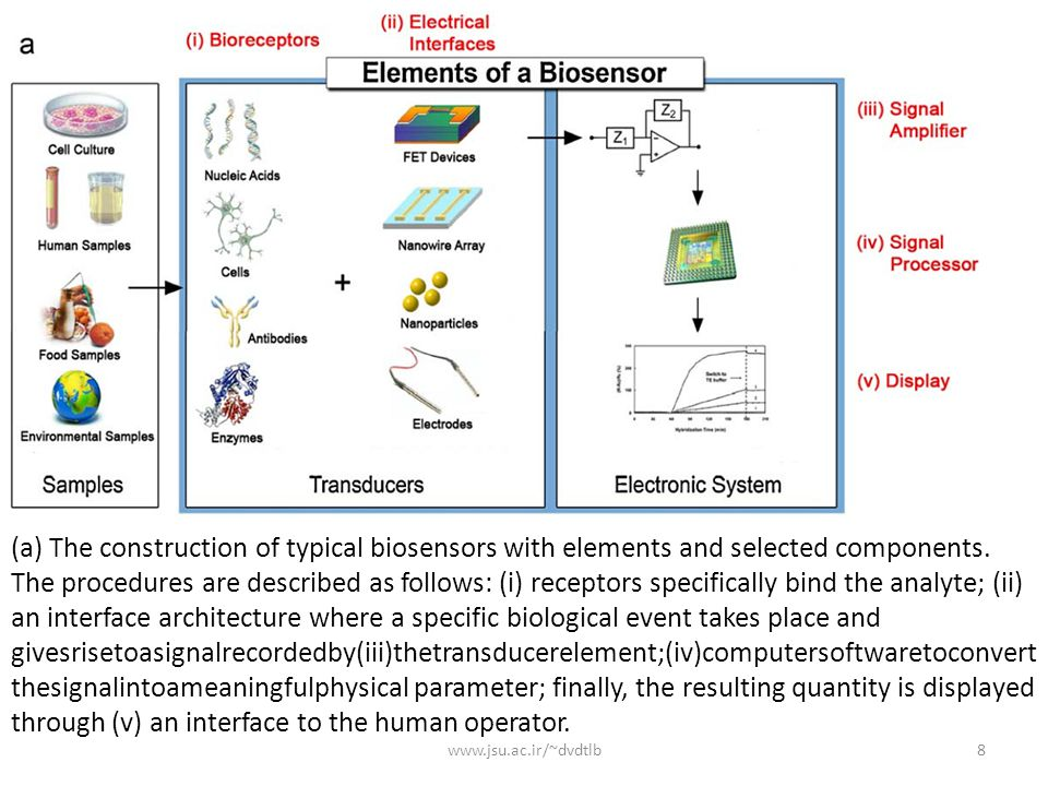 (a) The construction of typical biosensors with elements and selected components. The procedures are described as follows: (i) receptors specifically bind the analyte; (ii) an interface architecture where a specific biological event takes place and