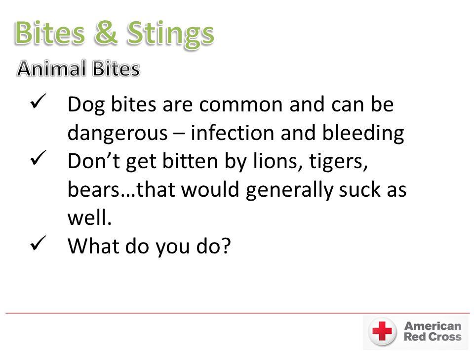 Bites & Stings Animal Bites