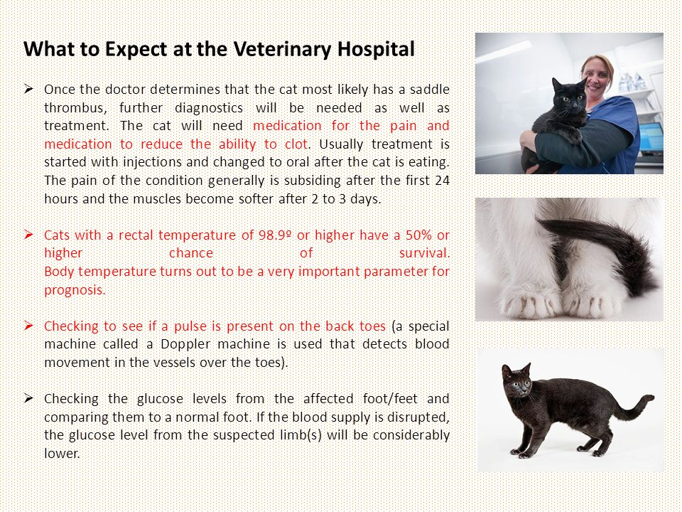 What to Expect at the Veterinary Hospital