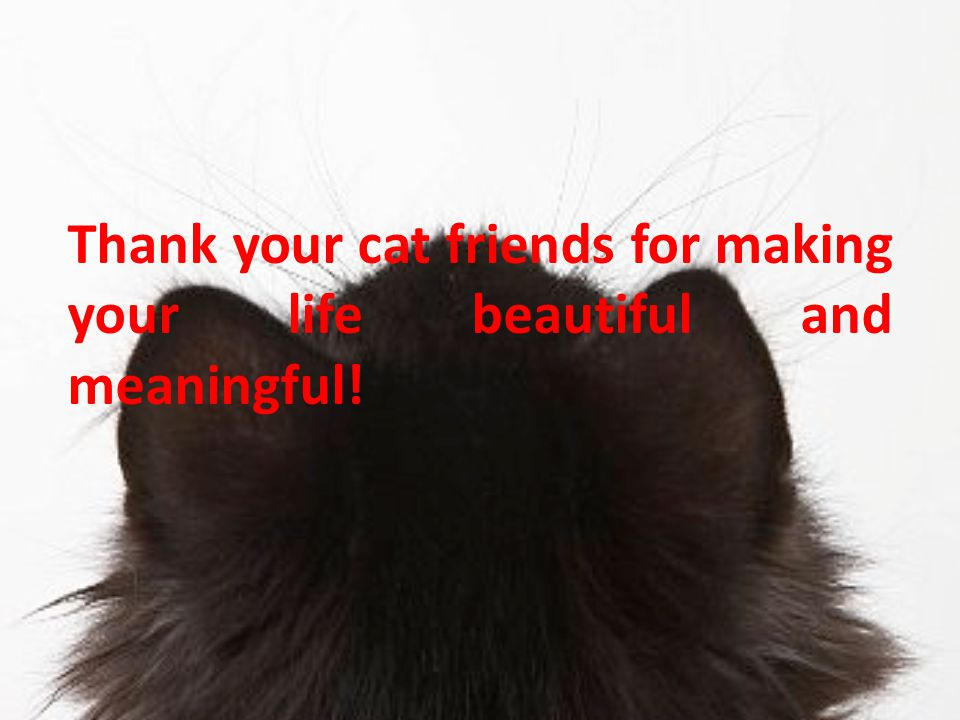 Thank your cat friends for making your life beautiful and meaningful!