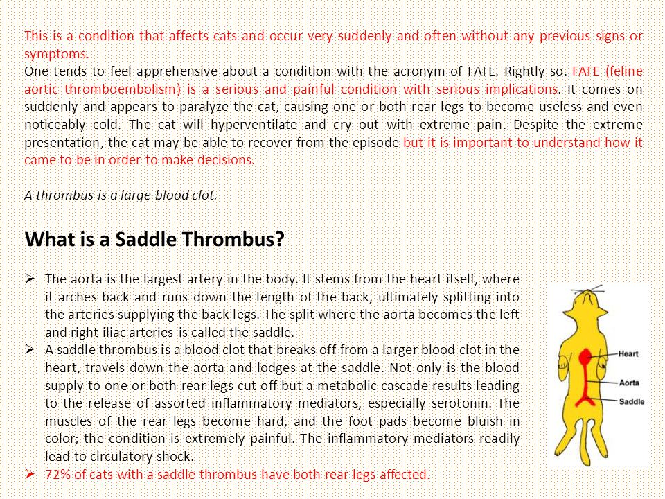 What is a Saddle Thrombus