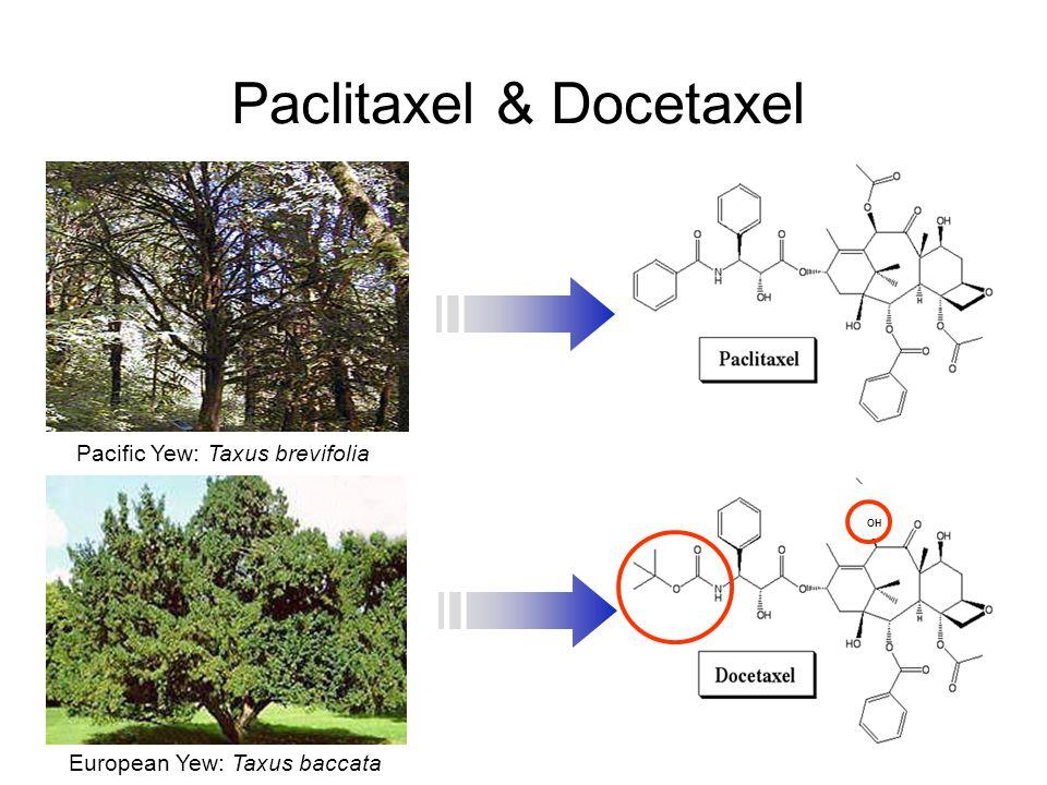 Paclitaxel & Docetaxel