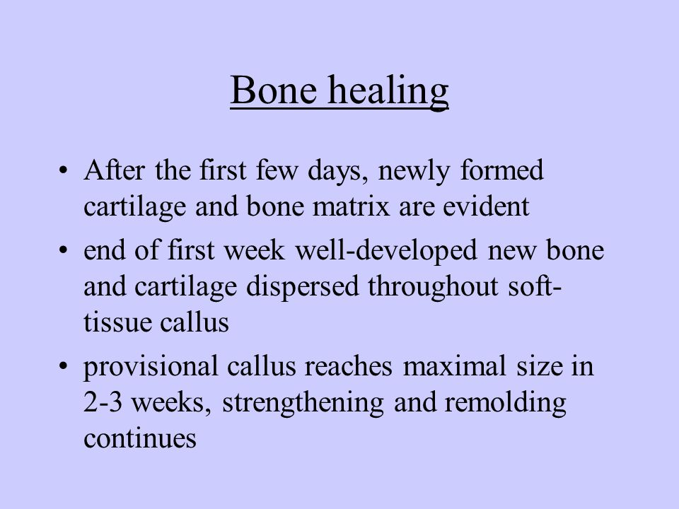 Bone healing After the first few days, newly formed cartilage and bone matrix are evident.
