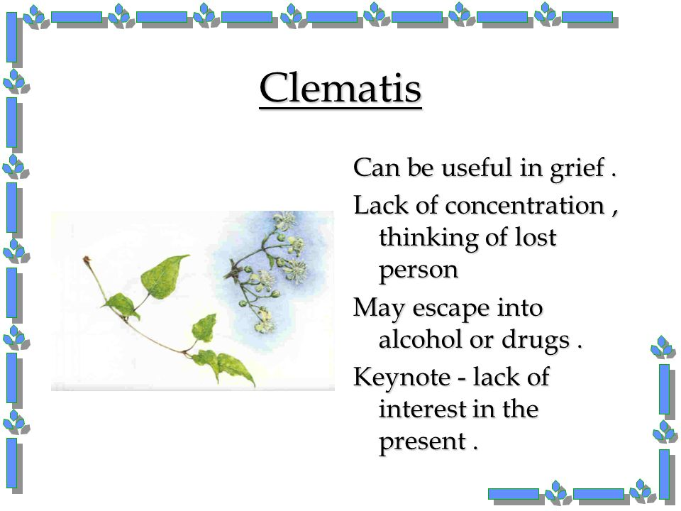 Clematis Can be useful in grief .