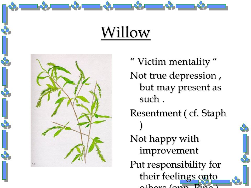 Willow Victim mentality