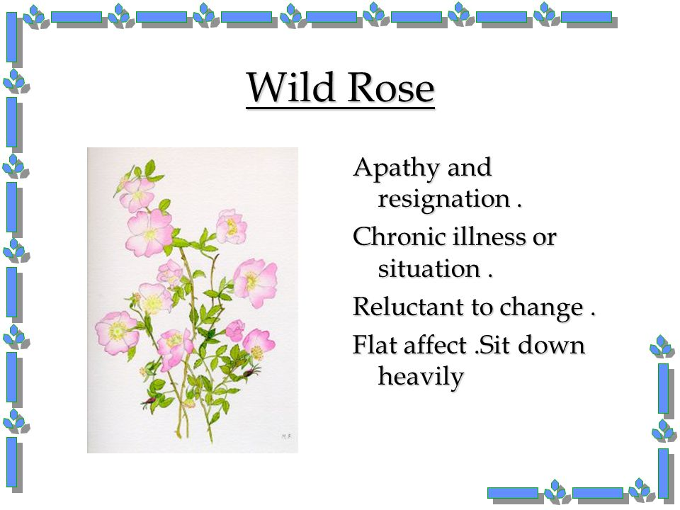 Wild Rose Apathy and resignation . Chronic illness or situation .