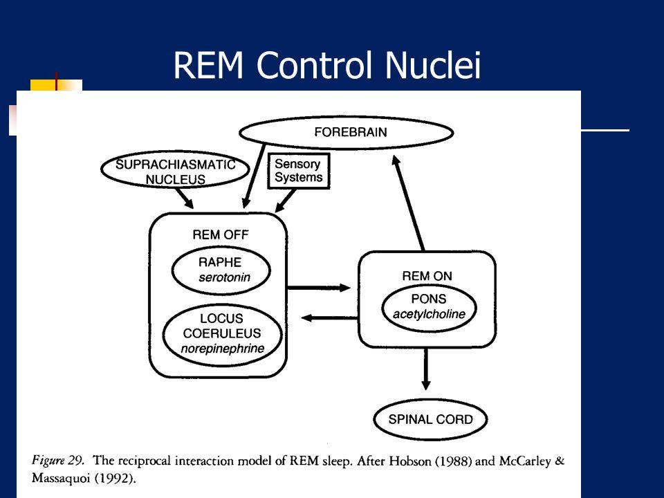 REM Control Nuclei