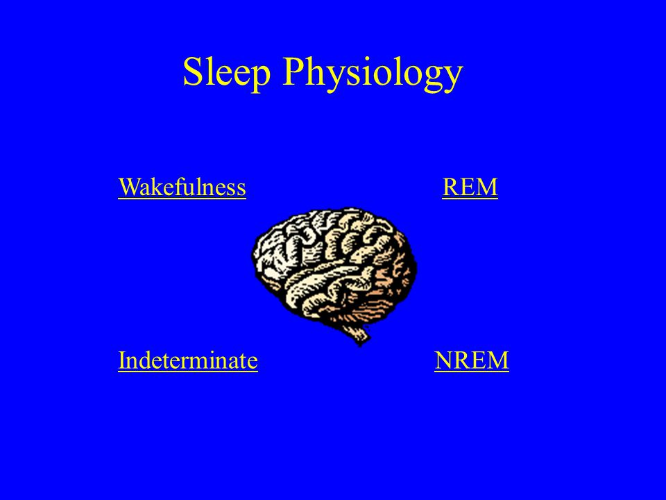 Sleep Physiology Wakefulness REM Indeterminate NREM