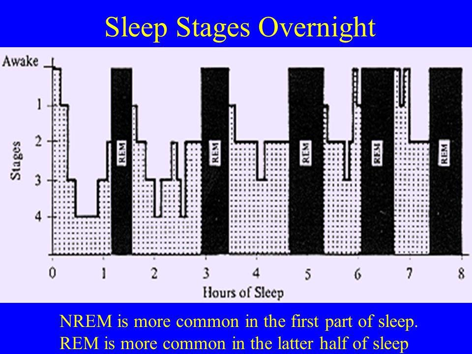 Sleep Stages Overnight