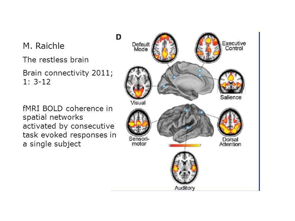 M. Raichle The restless brain Brain connectivity 2011; 1: 3-12