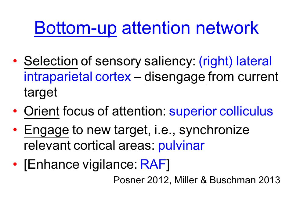 Bottom-up attention network