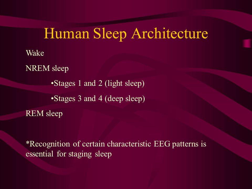 Human Sleep Architecture