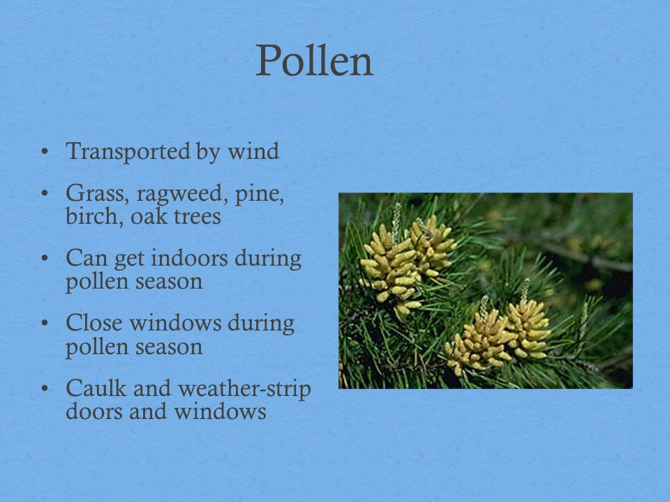 Pollen Transported by wind Grass, ragweed, pine, birch, oak trees