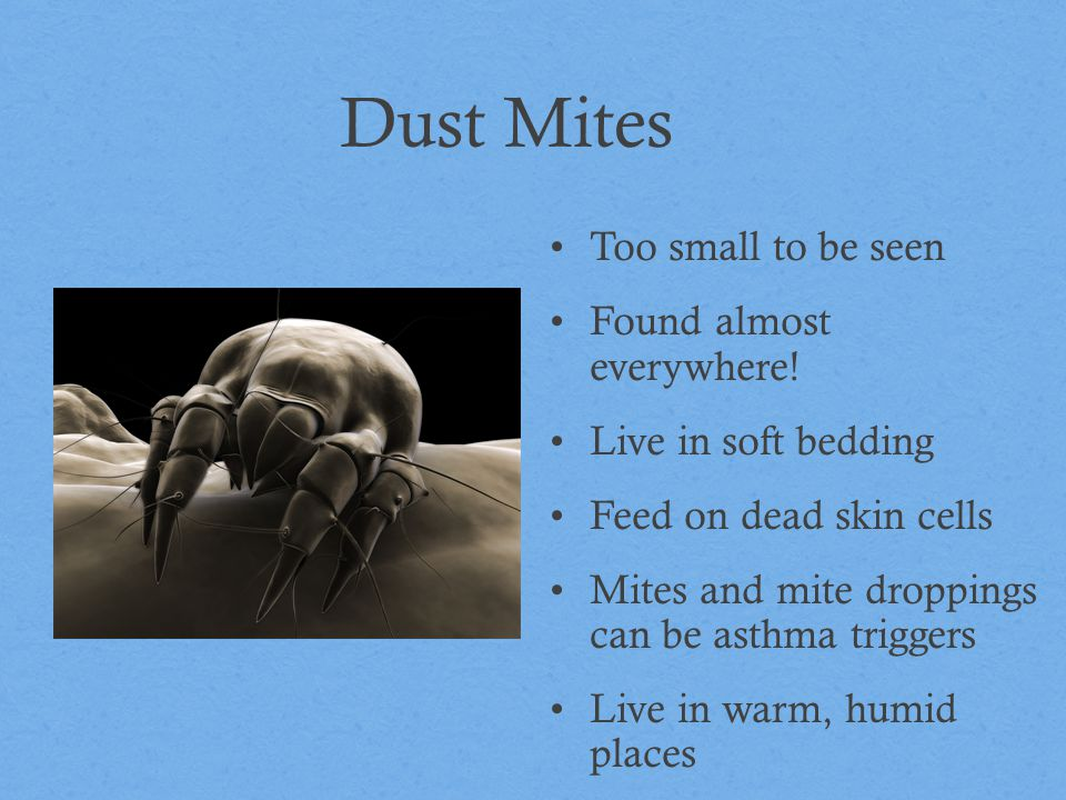Dust Mites Too small to be seen Found almost everywhere!