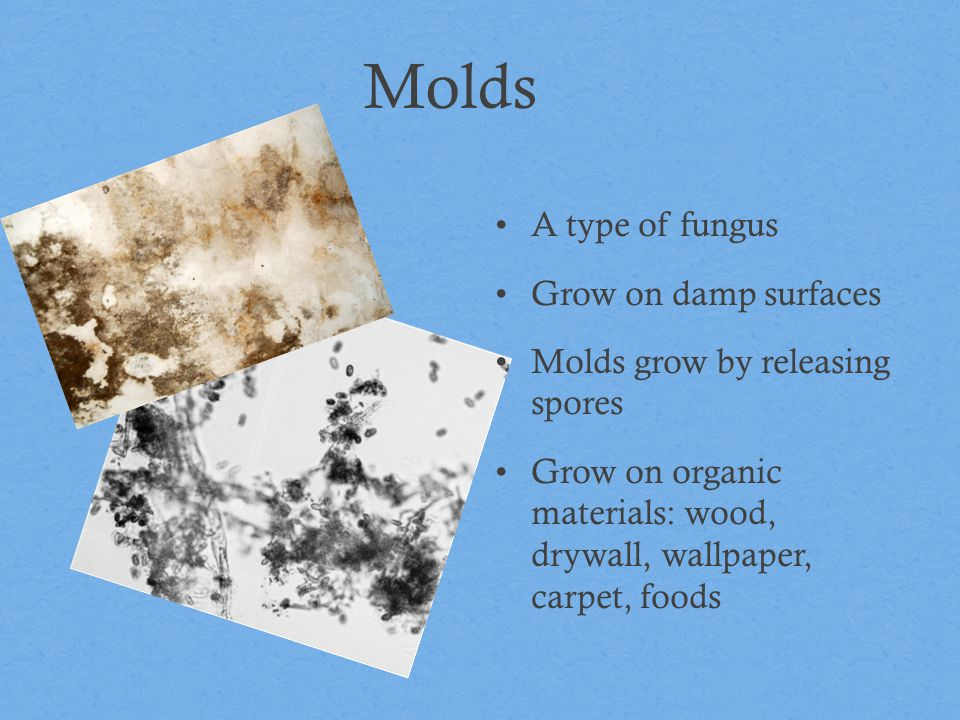 Molds A type of fungus Grow on damp surfaces