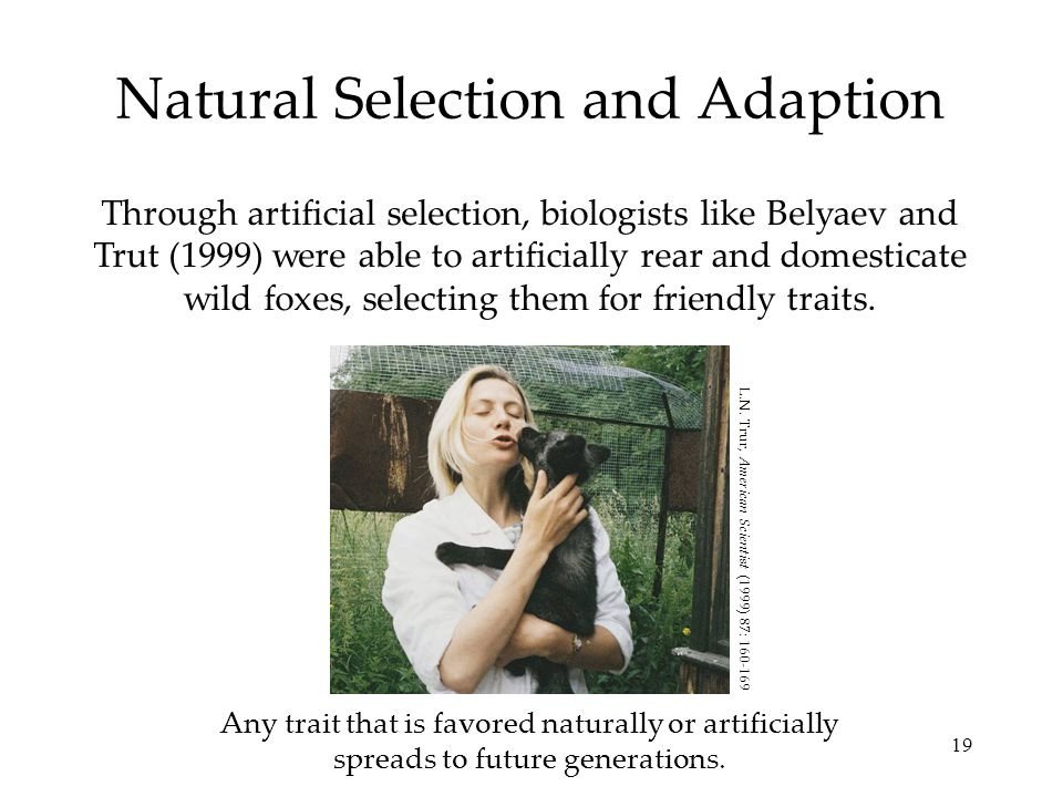 Natural Selection and Adaption