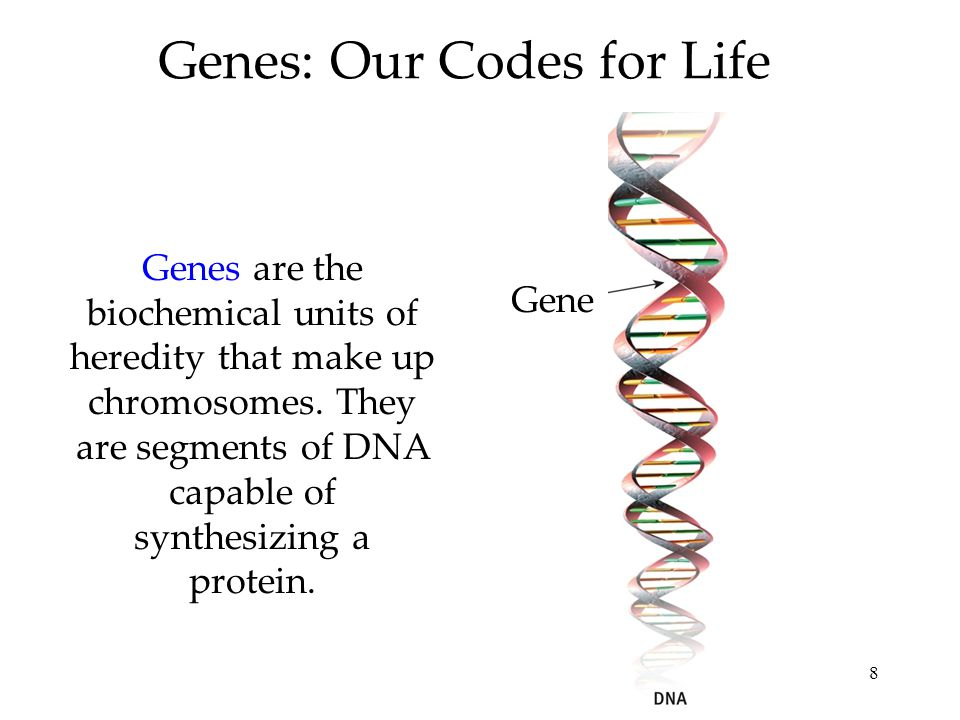 Genes: Our Codes for Life