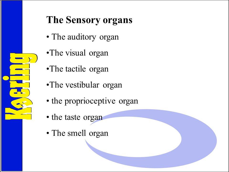 The Sensory organs The auditory organ The visual organ