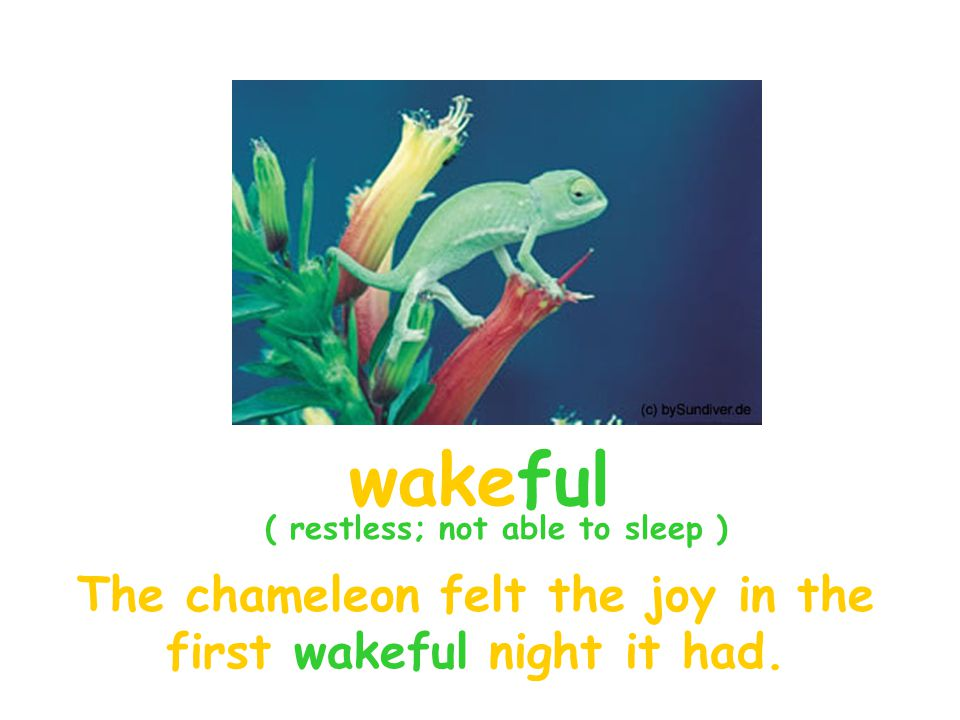 The chameleon felt the joy in the first wakeful night it had.