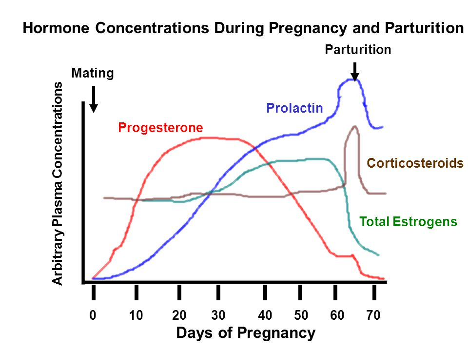 Hormone Concentrations During Pregnancy and Parturition
