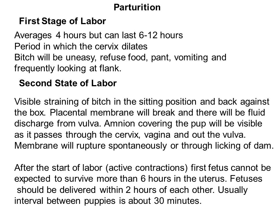 Parturition First Stage of Labor. Averages 4 hours but can last 6-12 hours. Period in which the cervix dilates.