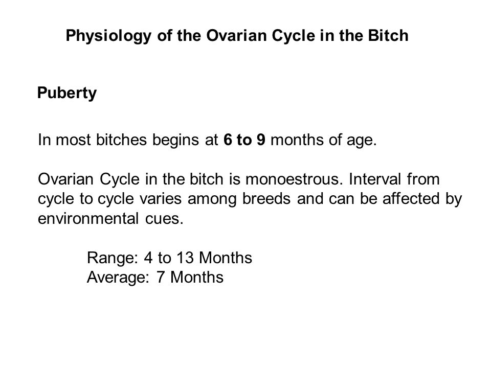 Physiology of the Ovarian Cycle in the Bitch