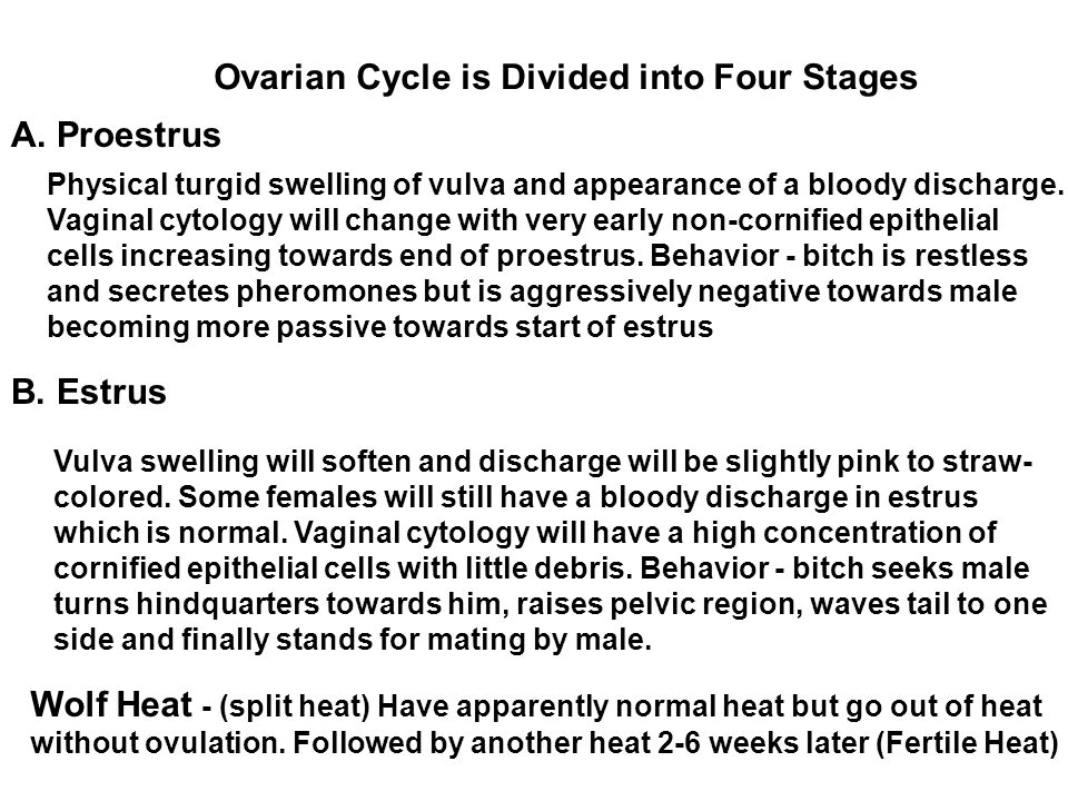 Ovarian Cycle is Divided into Four Stages