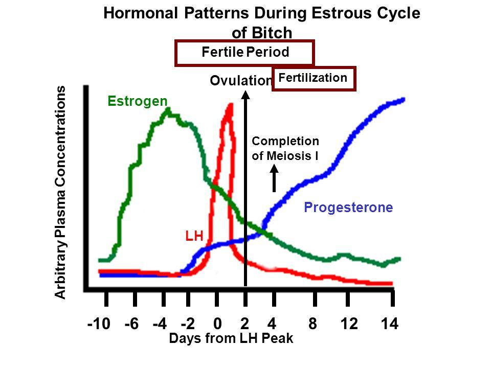 Hormonal Patterns During Estrous Cycle
