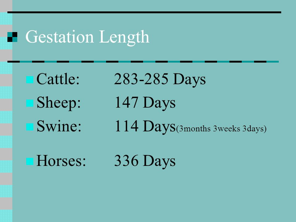 Gestation Length Cattle: 283-285 Days Sheep: 147 Days