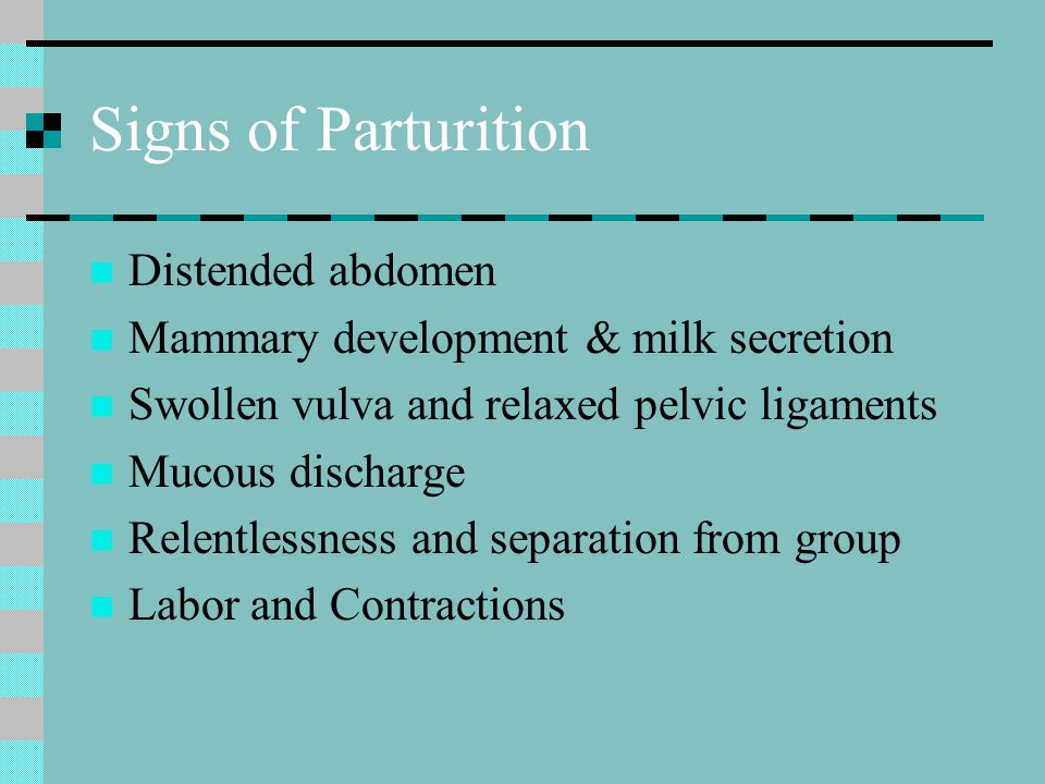 Signs of Parturition Distended abdomen