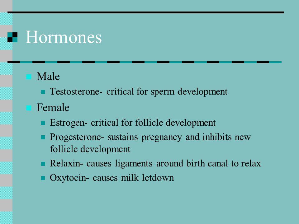 Hormones Male Female Testosterone- critical for sperm development