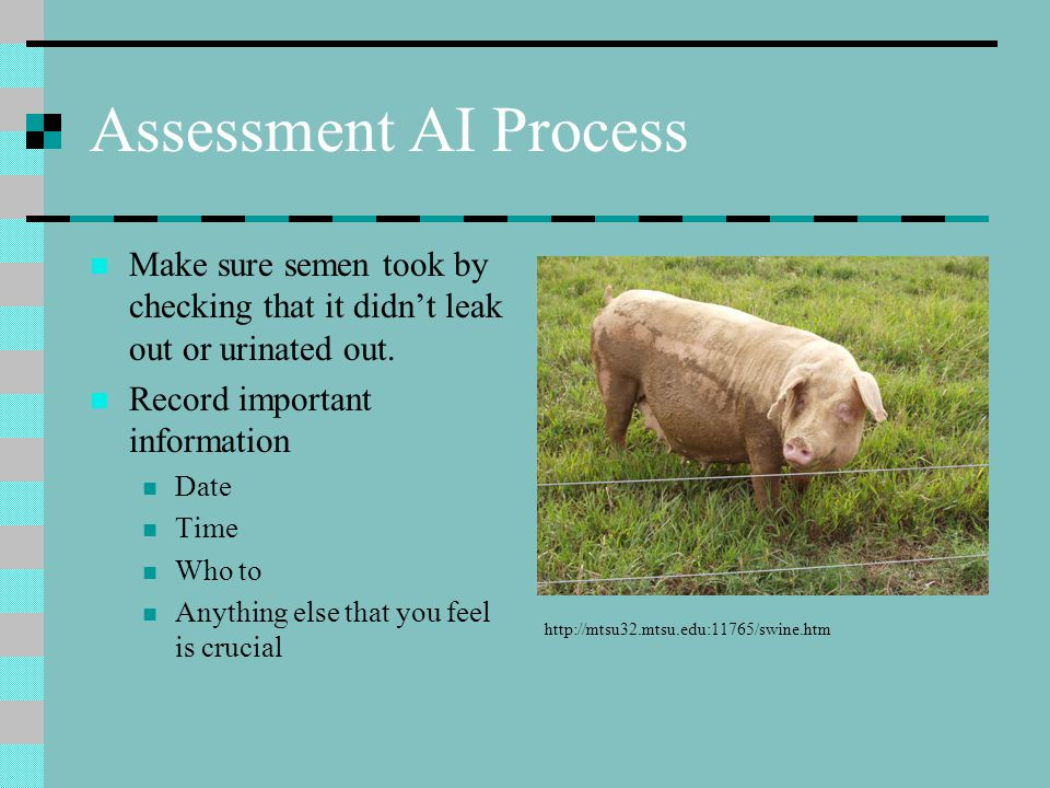 Assessment AI Process Make sure semen took by checking that it didn't leak out or urinated out. Record important information.