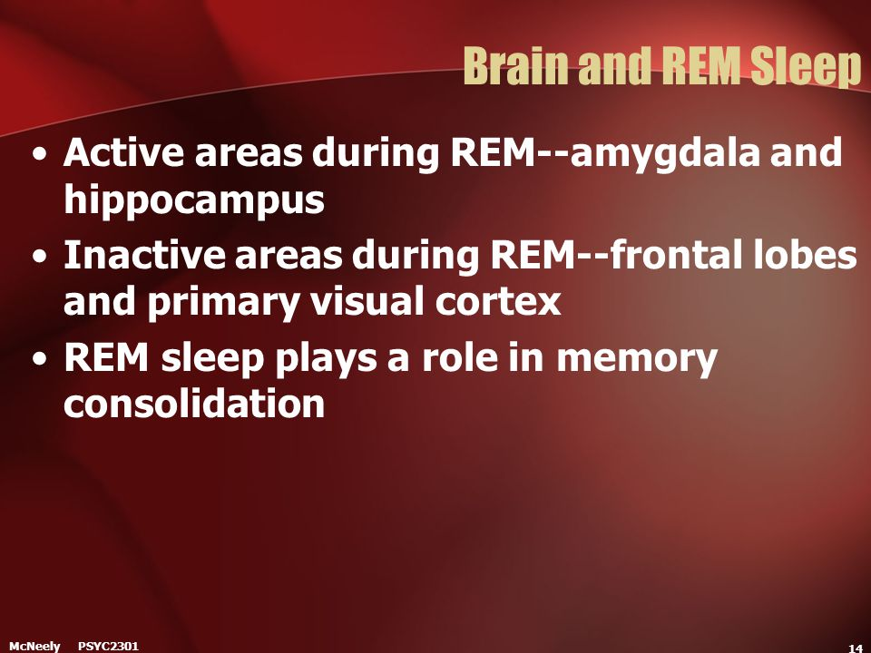 Brain and REM Sleep Active areas during REM--amygdala and hippocampus