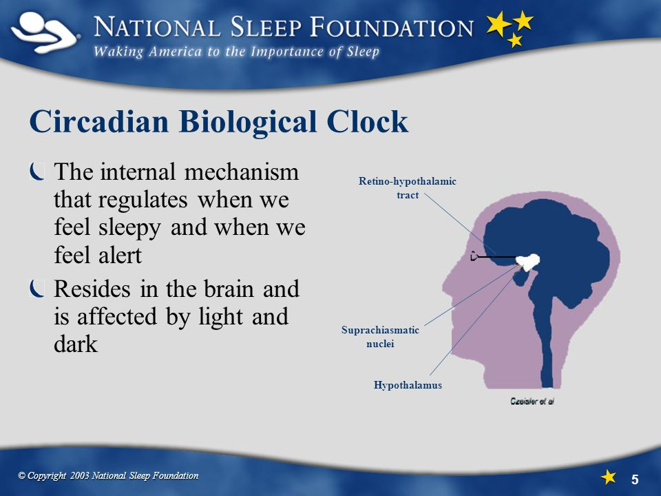 Circadian Biological Clock