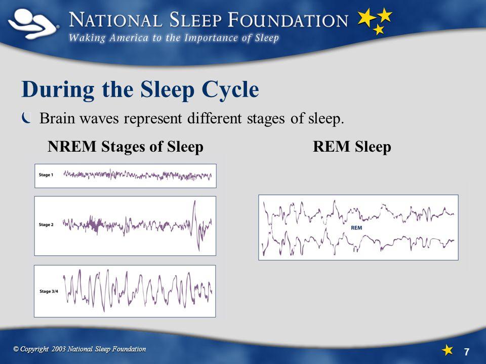 During the Sleep Cycle Brain waves represent different stages of sleep. NREM Stages of Sleep. REM Sleep.