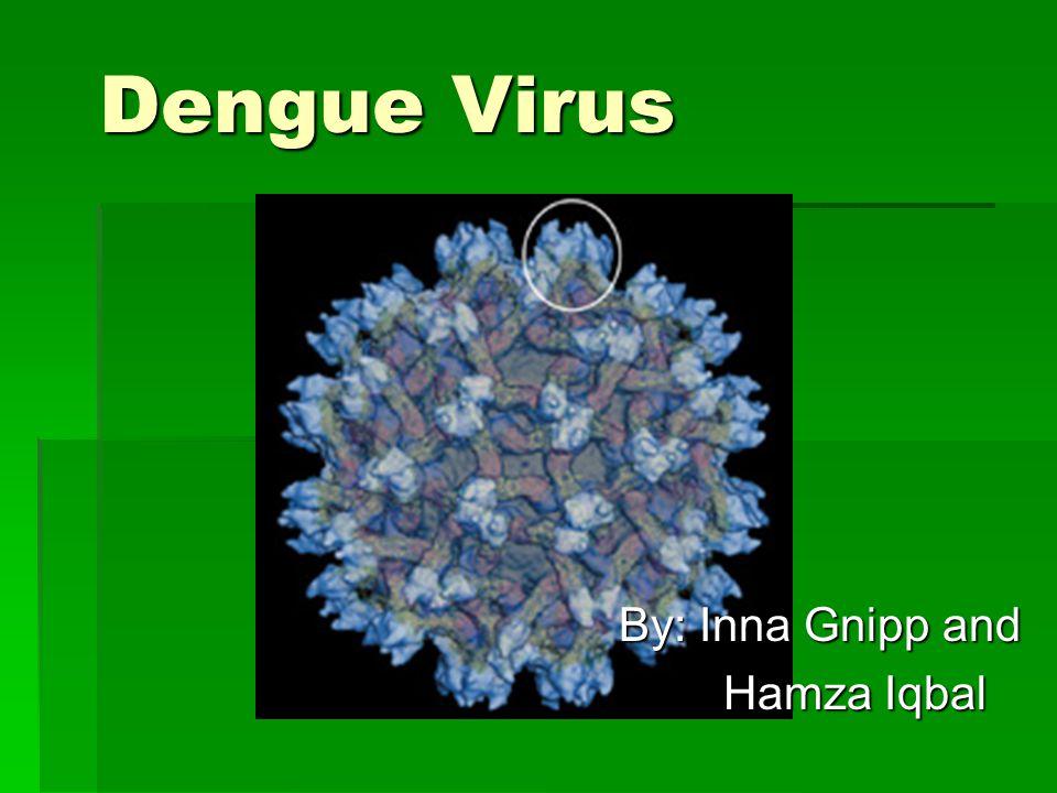By: Inna Gnipp and Hamza Iqbal