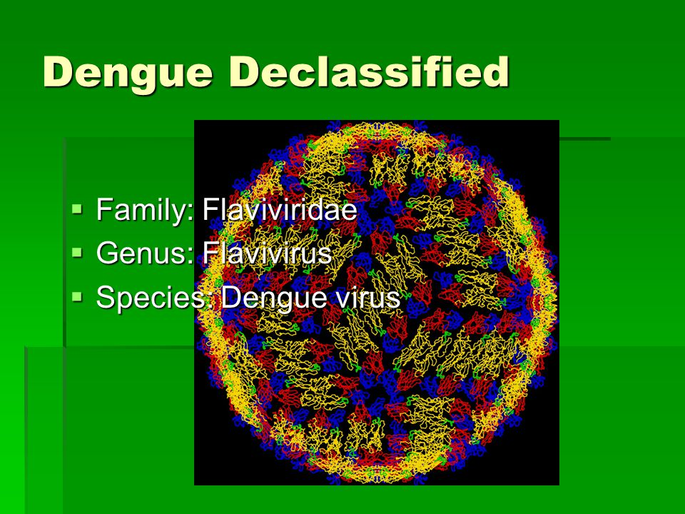 Dengue Declassified Family: Flaviviridae Genus: Flavivirus