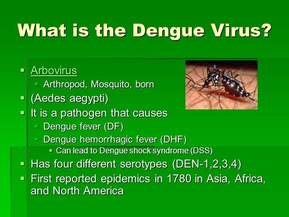 What is the Dengue Virus