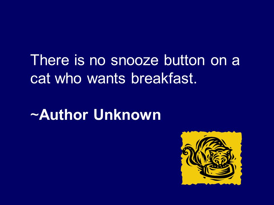 There is no snooze button on a cat who wants breakfast.