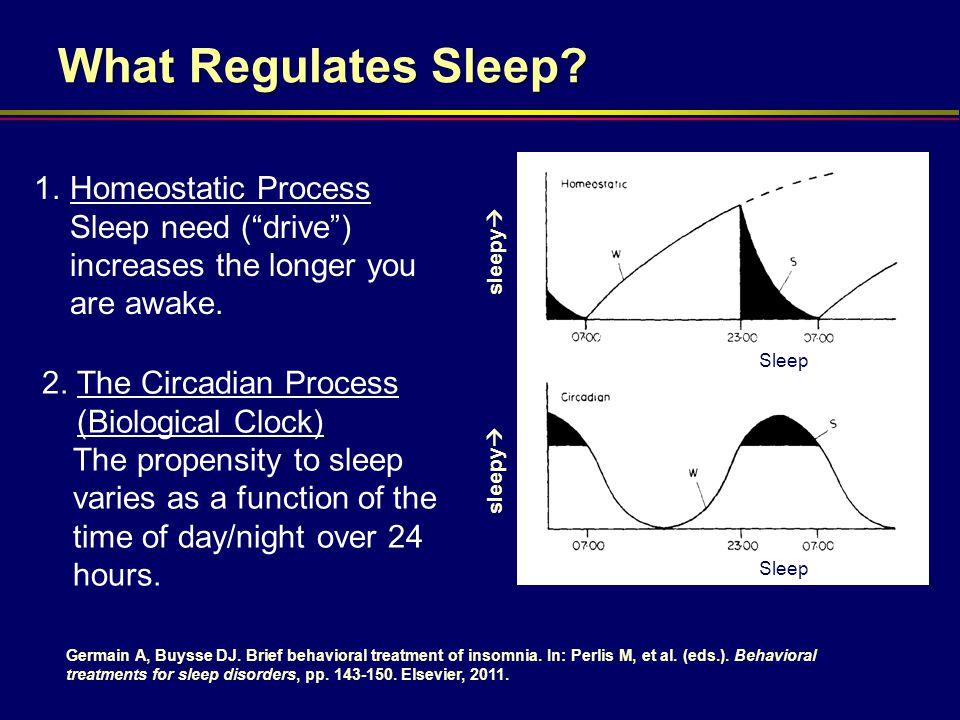 What Regulates Sleep Homeostatic Process Sleep need ( drive ) increases the longer you are awake.