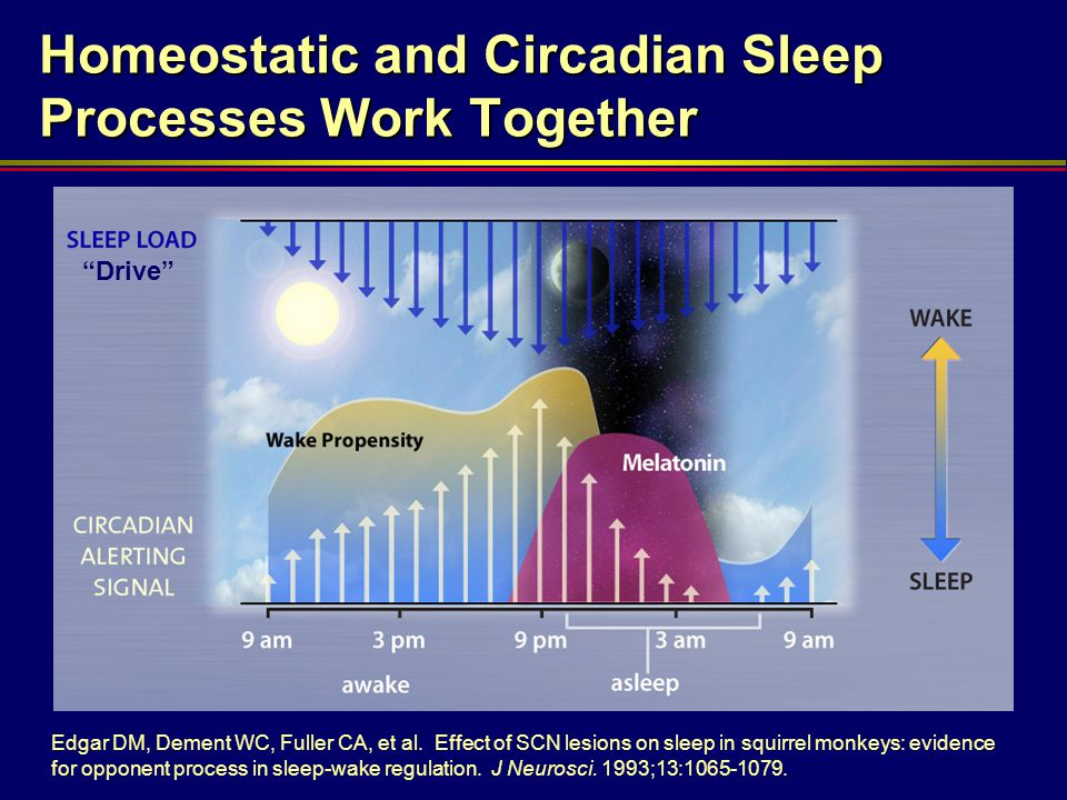 Homeostatic and Circadian Sleep Processes Work Together
