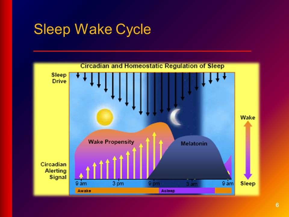 Sleep Wake Cycle ___________________________